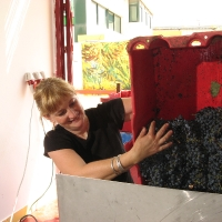 Orna Chillag recive Merlot grapes 2