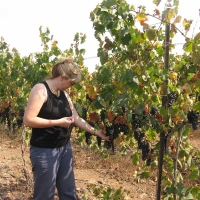 Orna in the Vinyard a day before harvest